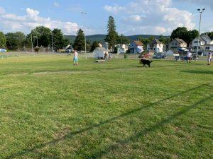 dog park craig park